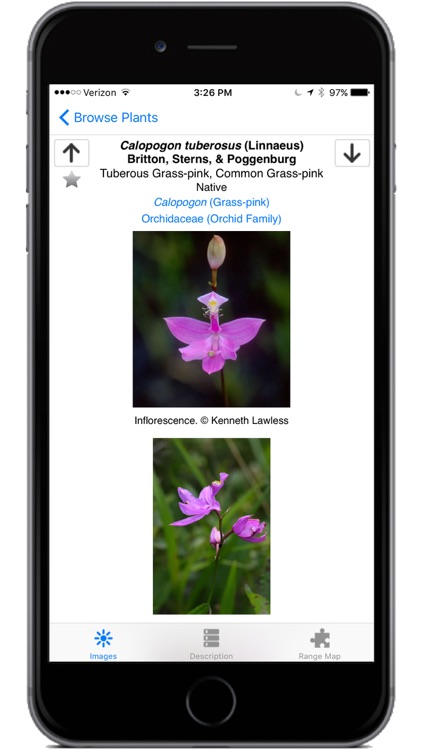 Flora of Virginia screenshot-4
