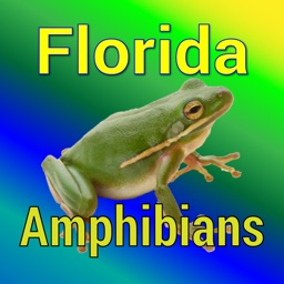 Florida Amphibians