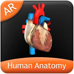 Human Anatomy - Circulatory