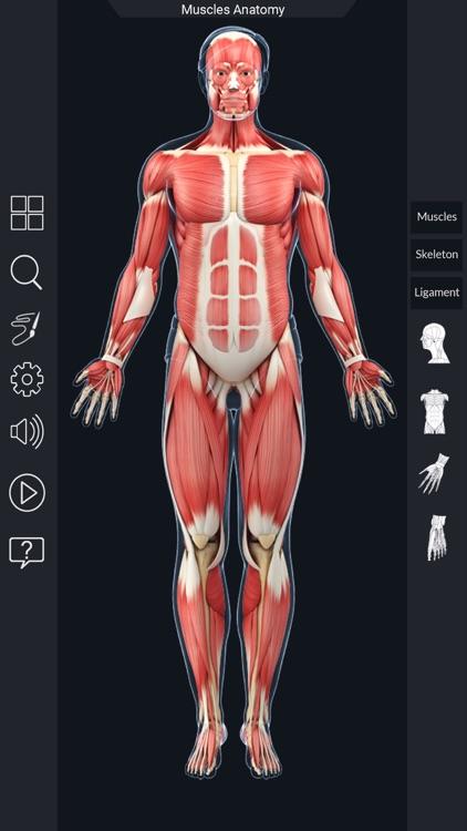 My Muscle Anatomy