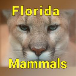 Florida Mammals