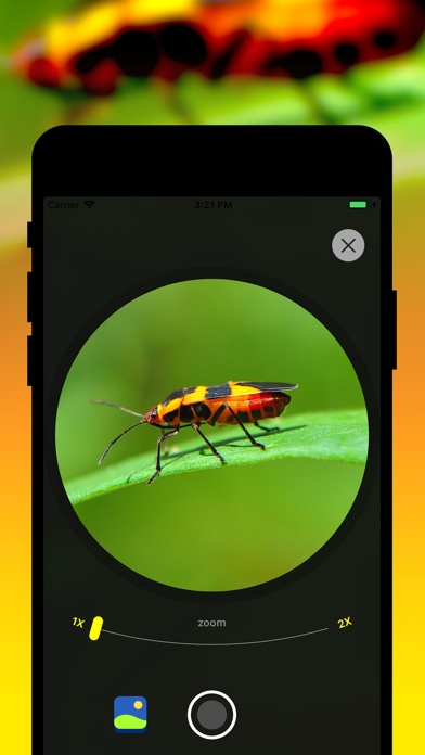 Insect Identification Screenshot