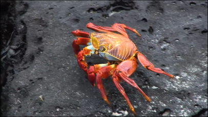 Video Touch - Sea Life screenshot 5
