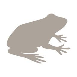 Fieldstone Guide: Amphibians