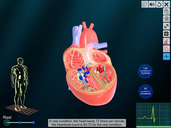 Heart - An incredible pump screenshot 14