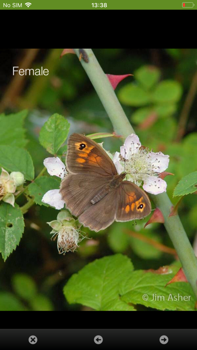 iRecord Butterflies screenshot four
