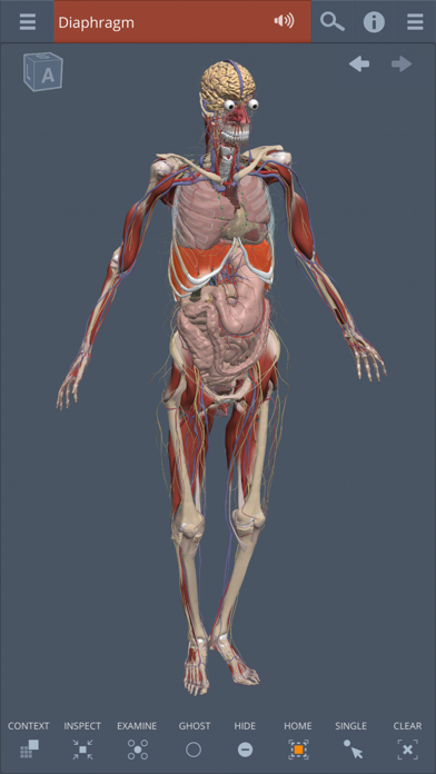 Whole body: 3D real-time screenshot one