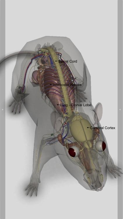 3D Rat Anatomy screenshot-4