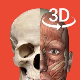 3Dbody人体解剖学