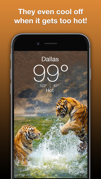Wildlife Wallpaper Weatherのおすすめ画像4