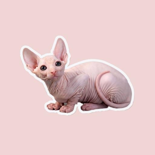 cute bald cats look like rats