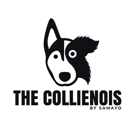 The Collienois Dog Blog