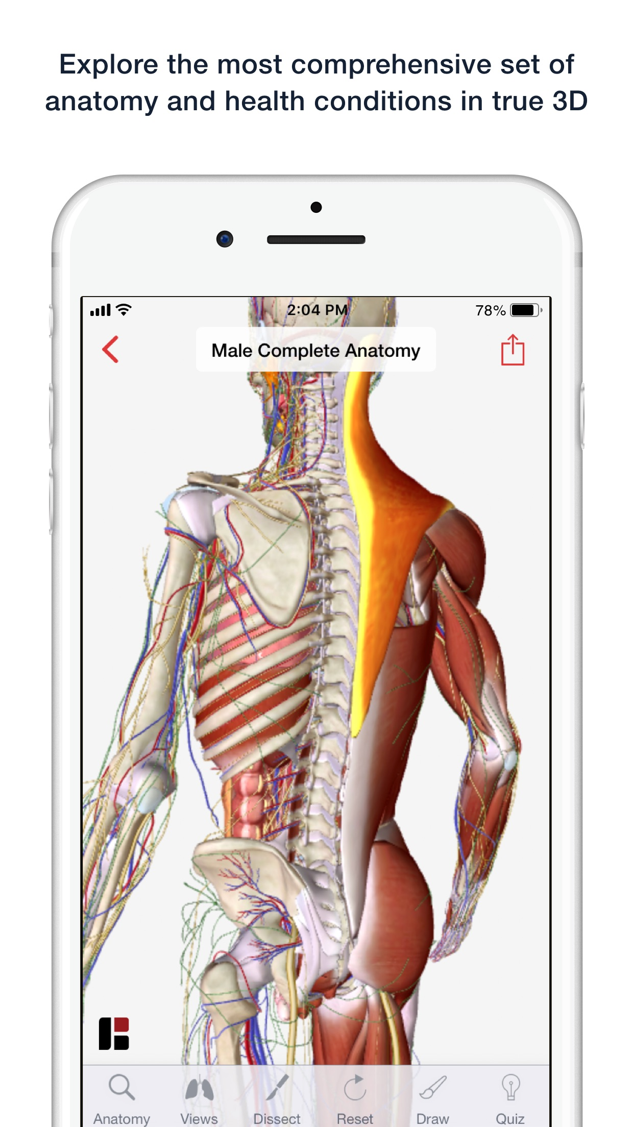 3D Human Anatomy & Disease Screenshot
