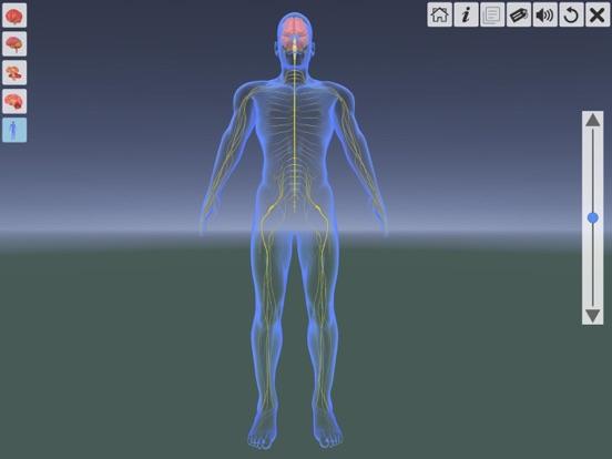 AR Human brain screenshot 14