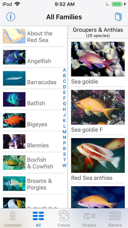 Red Sea Fish ID screenshot-4