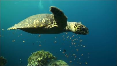 Video Touch - Sea Life screenshot 4