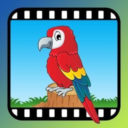Video Touch - Wild Birds