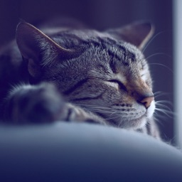 Relax Meditat