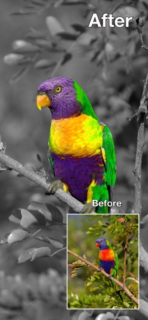 Color Changer-Coloring Editor Screenshot