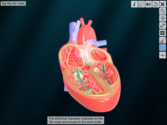 Heart - An incredible pump screenshot 13