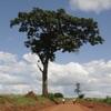 Useful Trees of East Africa - iPadアプリ