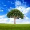 Trees 2.0 Reviews