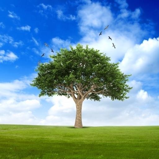 Trees 2.0