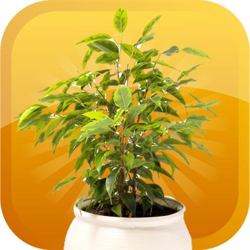 Plants-Emojis Stickers