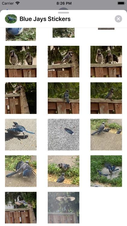 Blue Jay Stickers screenshot-3