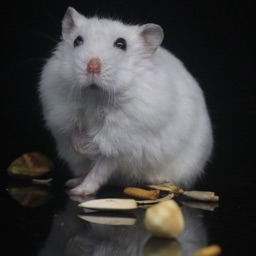 Hamster HQ - High Quality Hams