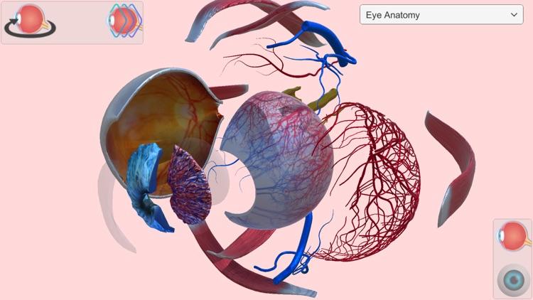 Eye Anatomy Atlas screenshot-1