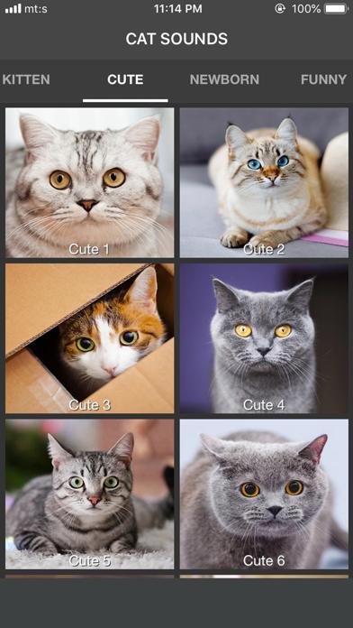 Cat Sounds - ColecciónCaptura de pantalla de3