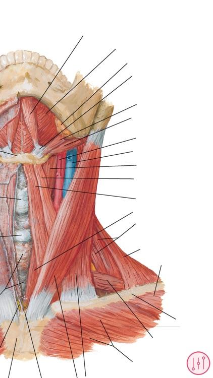 Anatomy Atlas, USMLE, Clinical