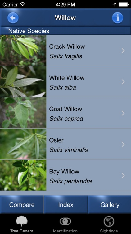 Tree Id identify UK trees