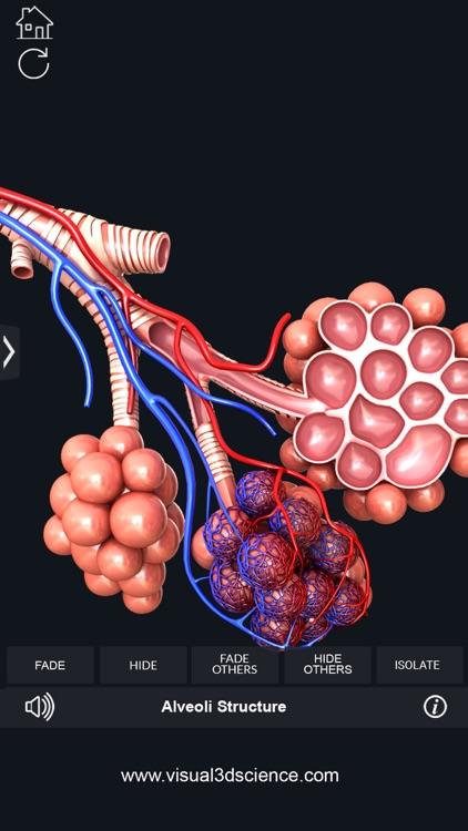 My Respiratory System Anatomy screenshot-7