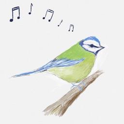 Bird Song ID (UK)