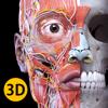 Anatomía - Atlas 3D - Catfish Animation Studio