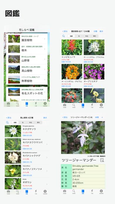 花しらべ 花認識/花検索 ScreenShot2