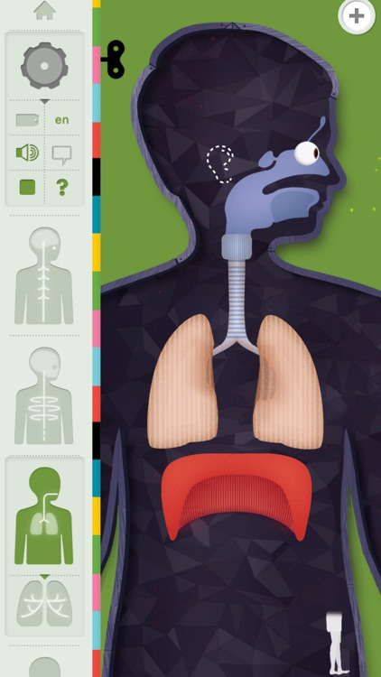The Human Body by Tinybop screenshot-4