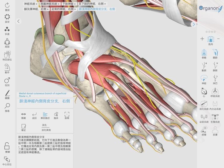 3D Organon Anatomy Enterprise screenshot-3