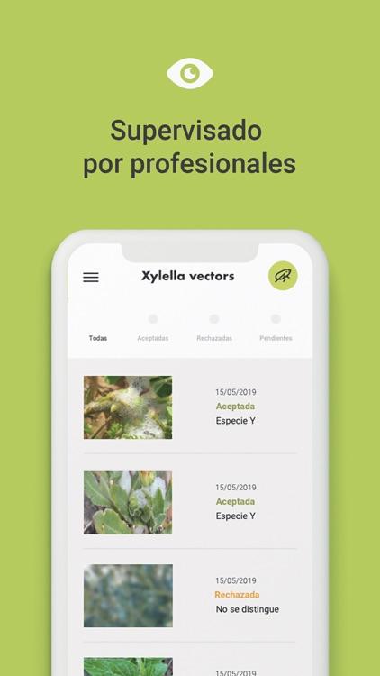 Xylella Vectors