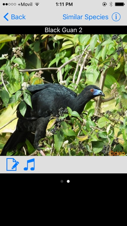 Costa Rica Birds Basic