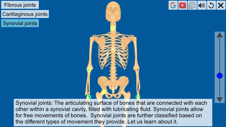 Joints: The Human Levers