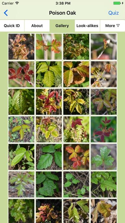 Rash Plants screenshot-4