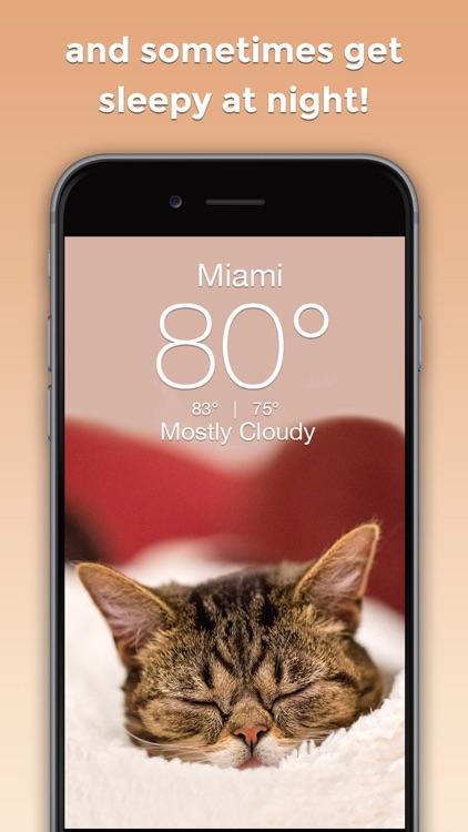 Lil BUB Cat Weather Report