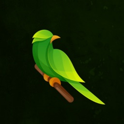 Calm - Bird Sounds