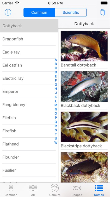 Oman Fish ID screenshot-9