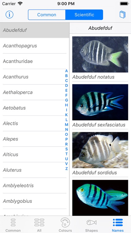 Oman Fish ID screenshot-8