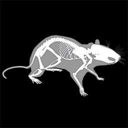 3D Rat Anatomy