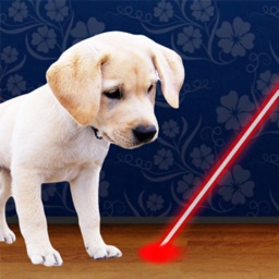 Laser Pointer for Dogs